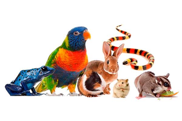 animales-exoticos