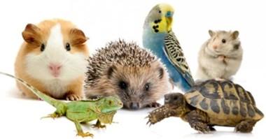 Veterinario de Animales Exóticos